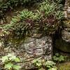 Fern Grotto, Newport Beach St. Park, WI